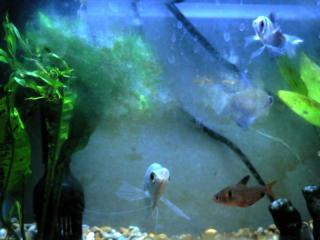 fishtank by Flickr user gia_s